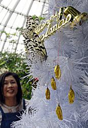 sanagi-tree1