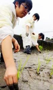 high school sake rice project