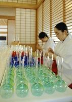 Hakata beauties making <em>champon</em>
