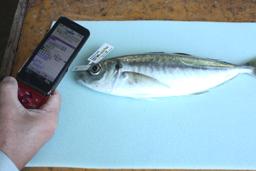 QR Code Fish